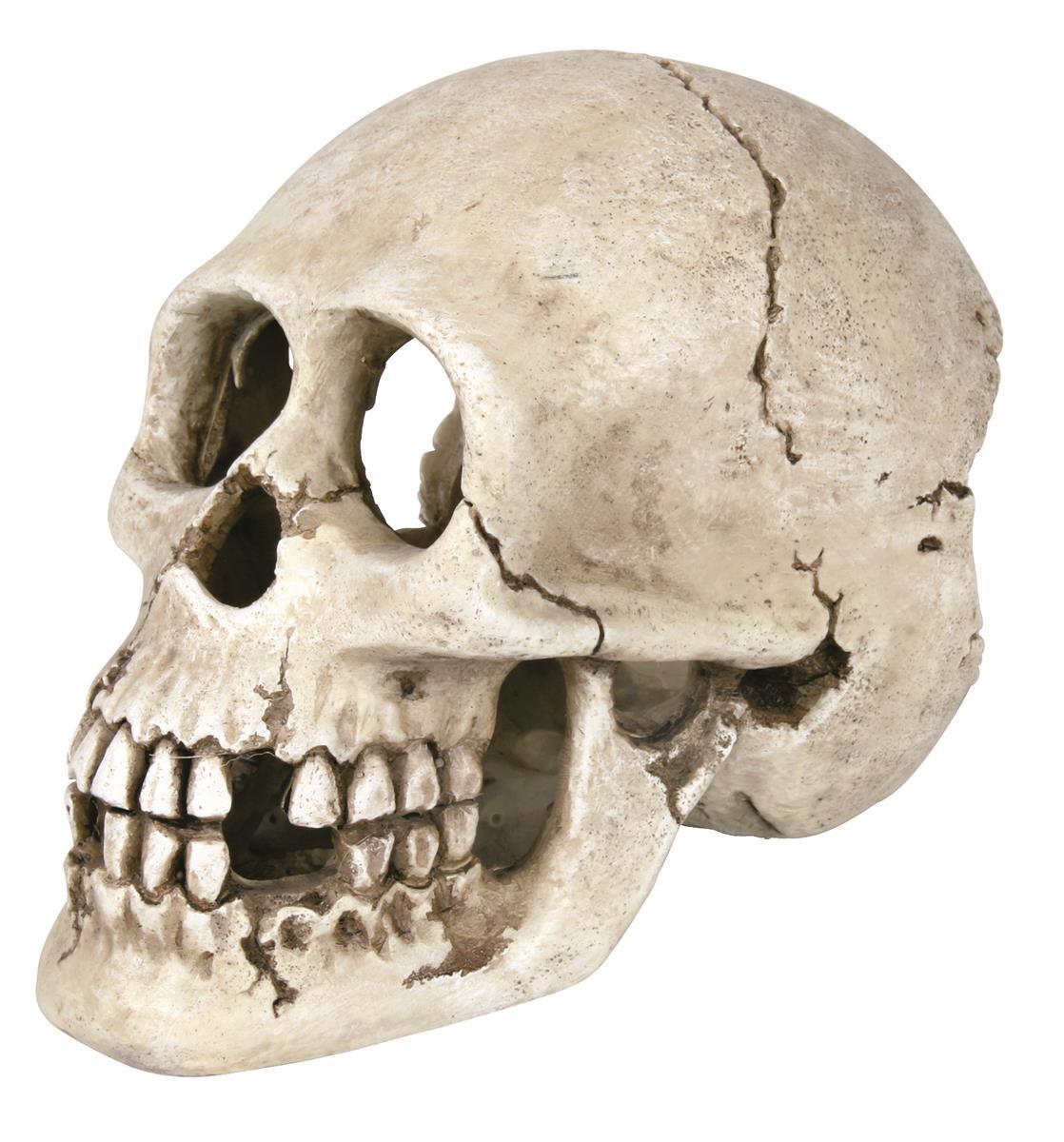 Akvariedekor kranie 15 cm